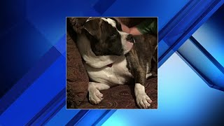 Dog shot by man claiming he was protecting his service dog
