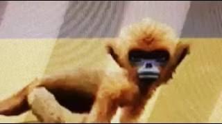 Petz: Crazy Monkeyz- Ruby