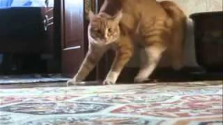 Gato Poseido por Satanas | What Da Faq Show