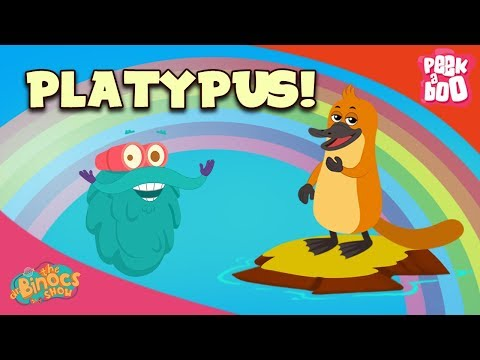 download What Is A Platypus? - The Dr. Binocs Show | Best Learning Videos For Kids | Peekaboo Kidz