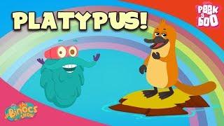 What Is A Platypus? - The Dr. Binocs Show | Best Learning Videos For Kids | Peekaboo Kidz