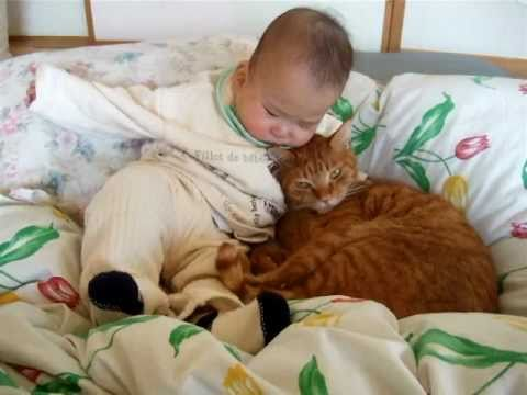 Thumbnail for Cat Video Cat and Baby Cuddle Close