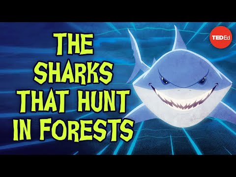 Video image: The sharks that hunt in forests - Luka Seamus Wright