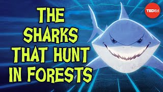 The sharks that hunt in forests - Luka Seamus Wright