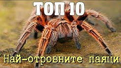 ТОП 10 Най-отровните паяци на планетата