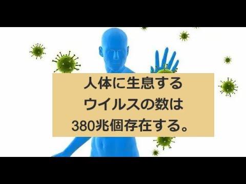 人体の常在ウイルスは380兆個以上存在する。:多くは細菌に感染するバクテリアファージですが、すべての生物の機能と進化に関わっており、免疫に関係する各種ウイルスも多く存在する。No2