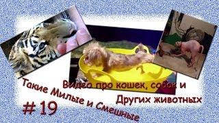 Видео про кошек, собак и других животных. Такие Милые и Смешные # 19