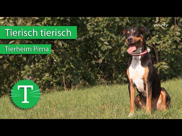 Tierisch tierisch aus dem Tierheim Pirna   Sendung vom 30.09.2020   MDR