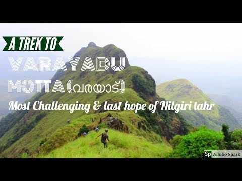 Varayadu Motta(വരയാട്) | trek  | #Nilgiri tahr | #Kerala Tourism