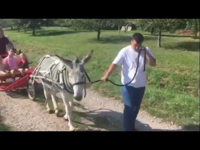 Aux Âneries d'Uffholtz Handiane Haut Rhin - Handiane - 29/08/2019
