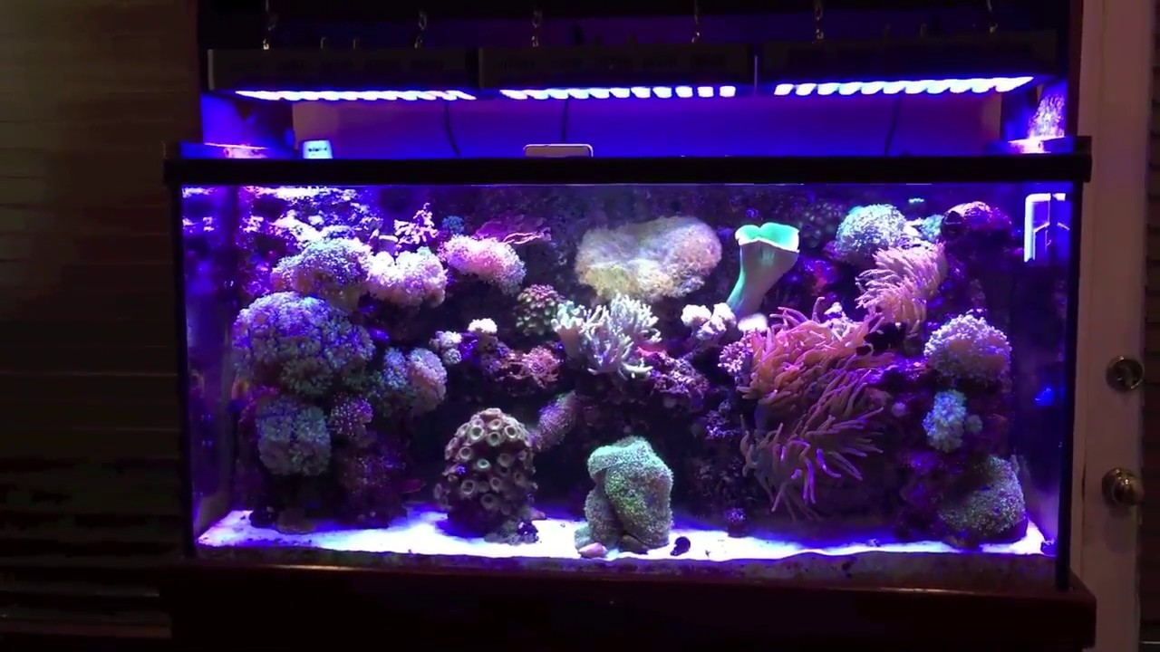 China Led Reef Lighting 165w Junk Or Good