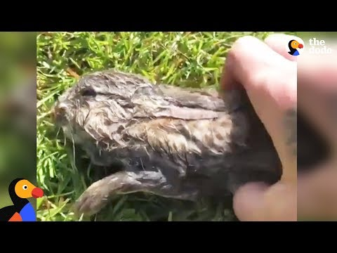 Bunny Rescued From Lake by Incredible Guy | The Dodo