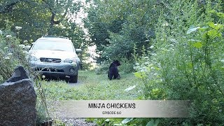 Conversations with A Bear! - Ninja Chickens - Episode 60