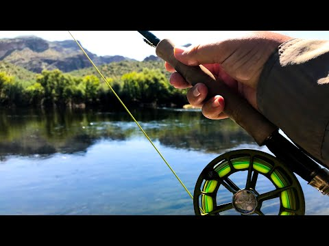 Fly Fishing The Salt River! (Day 10)
