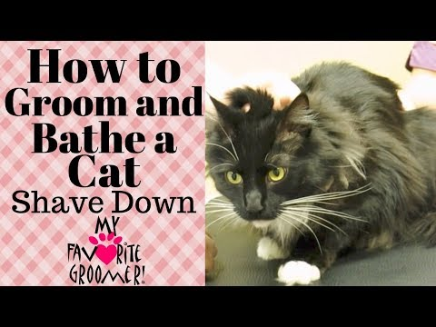 How to Groom a cat