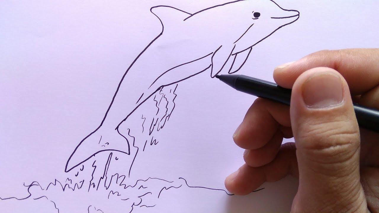 Cara Menggambar Lumba Lumba