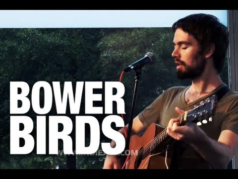 "Bowerbirds ""Northern Lights"" 