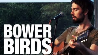 """Bowerbirds """"Northern Lights"""" 