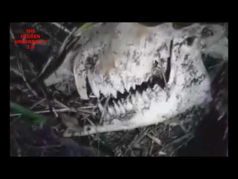 nouvel ordre mondial   Les restes d'un Chupacabra découverts au Chili