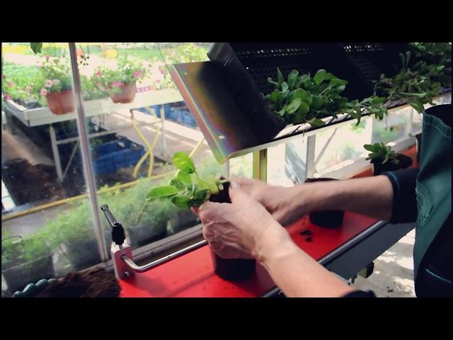 Podošanas tehnoloģijas Bulduru Dārzkopības vidusskolas mācību siltumnīcā