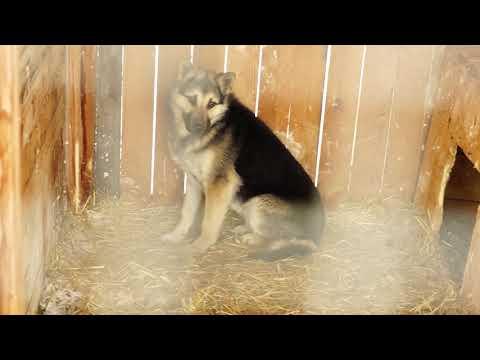 Отлов собак в Верхней Пышме