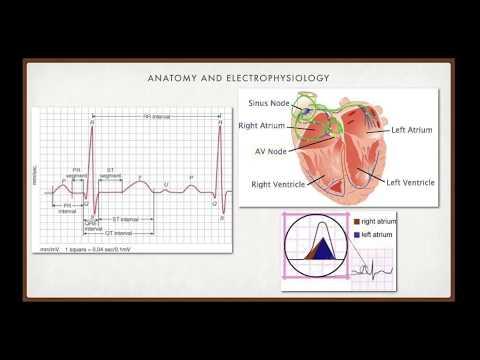 Education Portal : EKG Interpretation