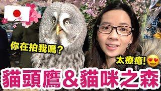 一年一度的日本京都大阪之旅~這次去看了好多動物、貓咪、還有貓頭鷹!...