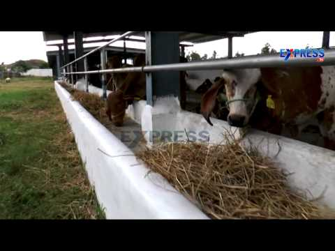 "Successful Commercial Dairy farming with ""Country Cows"" or ""Desi Aavulu"" by Muppalla Harish Kumar"