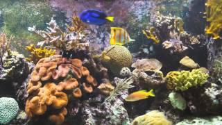 Морской аквариум с рыбой попугай