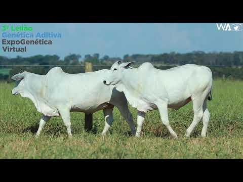 LOTE 36 - DUPLA - REM 10484, REMP 939 - 3º Leilão Genética Aditiva Expogenética 2020