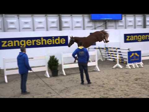 Tannan VM Z ( Taloubet K Z x Kannan x Casantos) Stallion approval 2015 Zangersheide