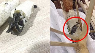 【海外ニュース】バンブースティックライスにトカゲの死骸混入  、酷い体臭を理由に飛行機を降ろされた一家  - トモニュース