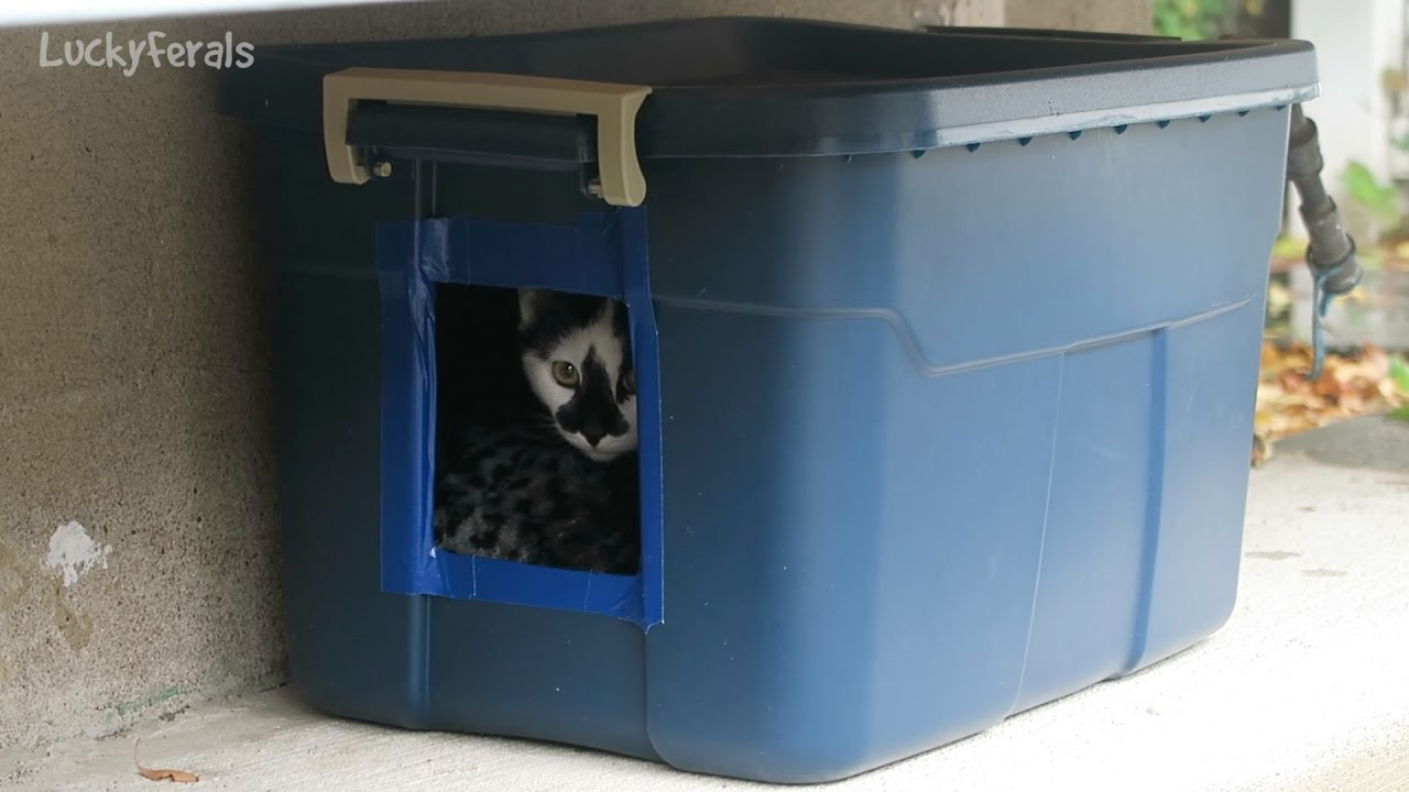 Building An Outdoor Cat House Shelter