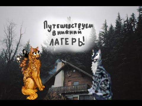 Объявления о продаже кошек и котят в россии на avito.