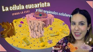 La célula eucariota animal y los orgánulos celulares (Para ESO) - Biología - Bio[ESO]sfera