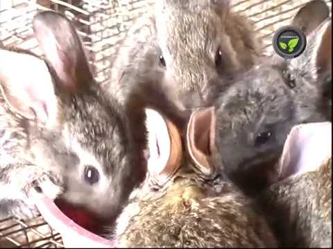 Rabbit Farming (Kannada)
