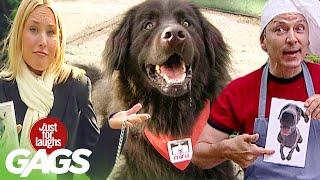 Best of Dog Pranks Vol. 3 | Just For Laughs Compilation