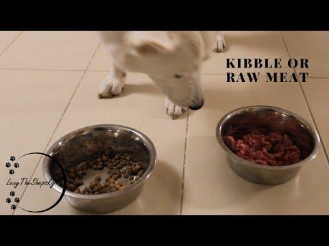 Raw meat or Kibble Food!