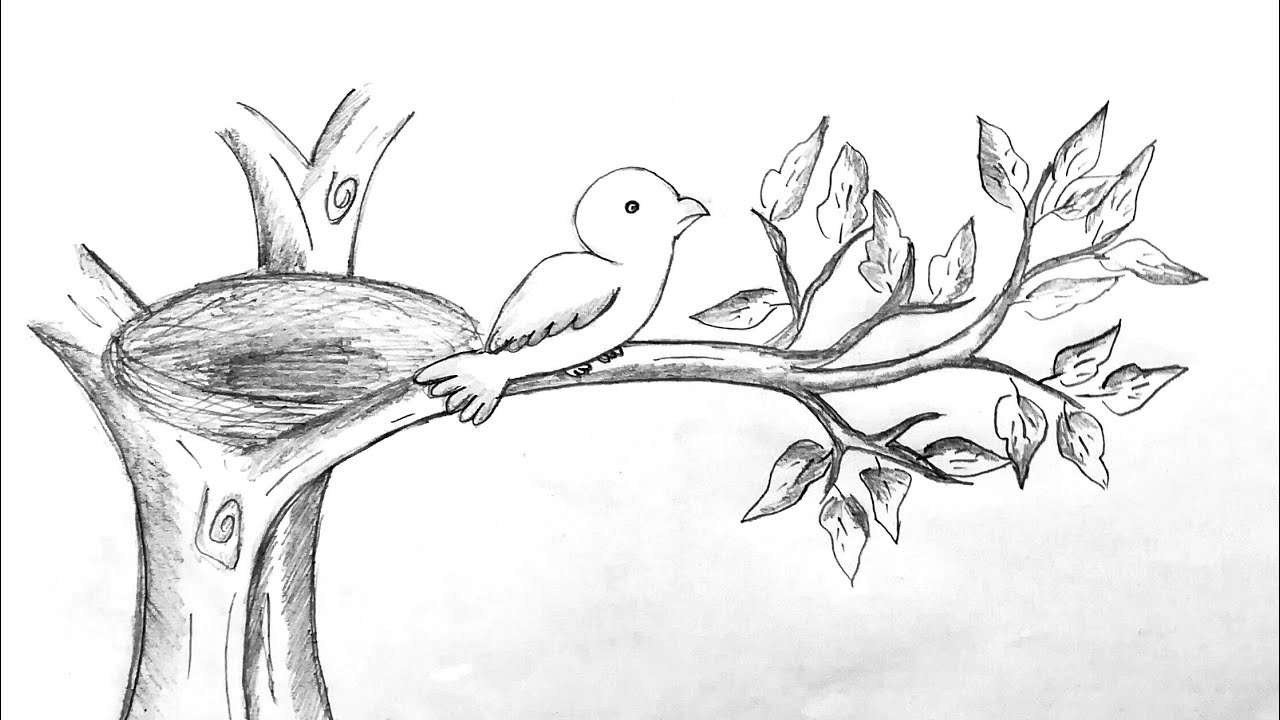 HOW TO DRAW A BIRD SITTING ON A BRANCH OF TREE - YouTube