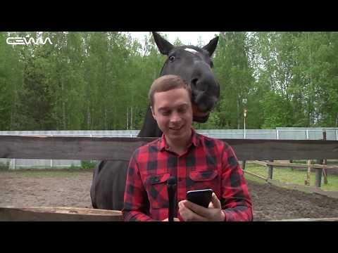 В Фатежском районе выращивают лучших спортивных лошадей в стране