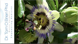 Passion Flower health benefits