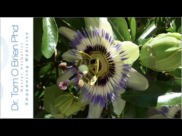Passion Flower health benefits