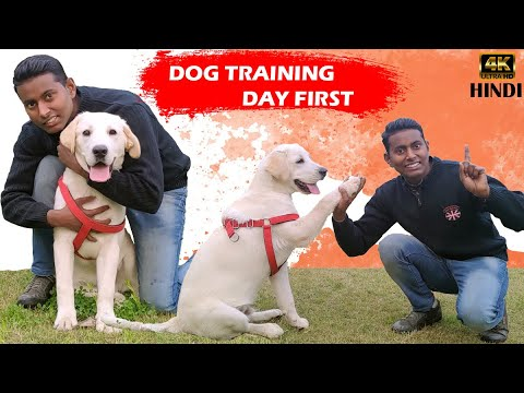 Labrador Puppy Training - Day 1st || Training Session For Beginners in Hindi || ALEXA THE LABRADOR