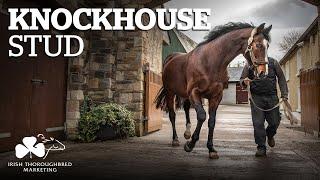 ITM Irish Stallion Showcase 2021 - Knockhouse Stud