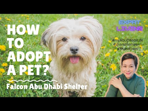 HOW TO ADOPT PETS FROM THE FALCON ANIMAL SHELTER, ABU DHABI?