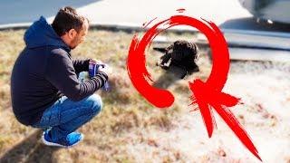 VLOG: Подобрали бездомную собаку породы - Шарпей