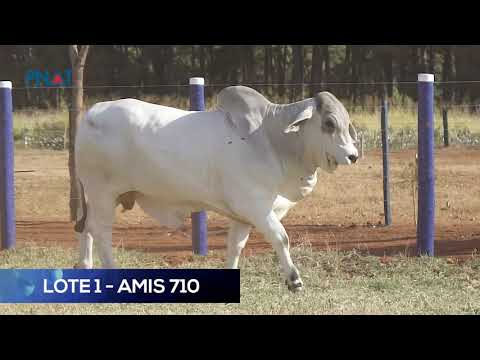 LOTE 1 - AMIS710 - BRAHMAN