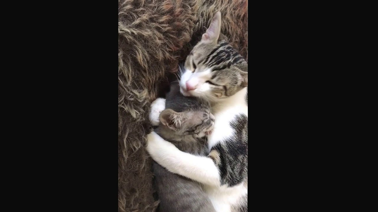 licking-the-kitty-tomas-logan-porn