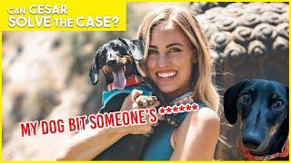 MY WIENER DOG BIT SOMEONE'S WEENIE | Cesar Solves the Case | Limited Series
