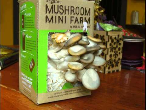 how to start a mushroom farm
